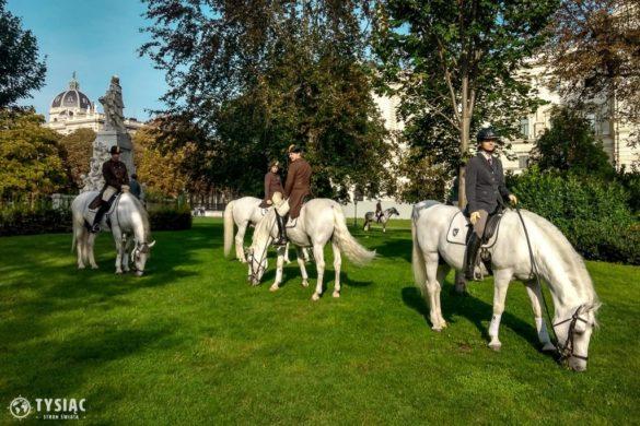 Atrakcje Wiednia - Park Burggarten i Hiszpańska Szkoła Jazdy