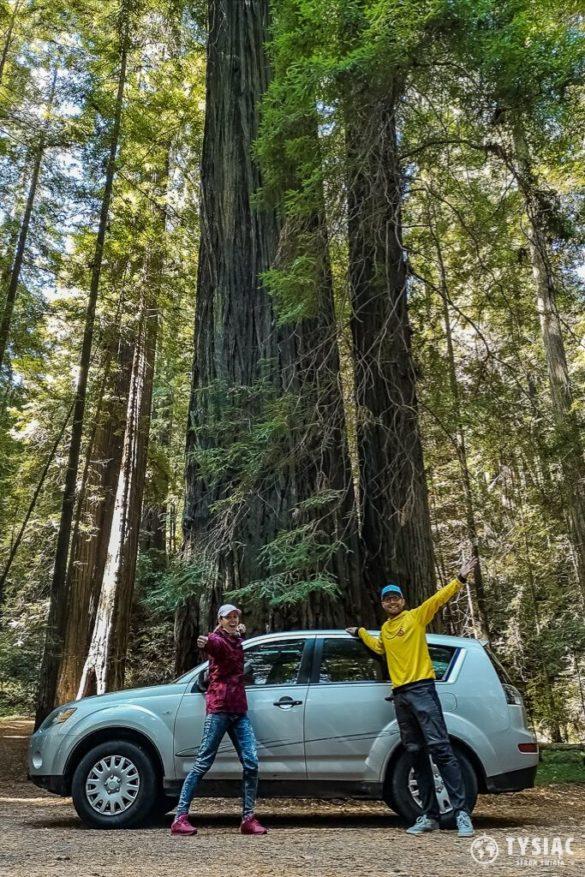 amerykańskie drogi redwood