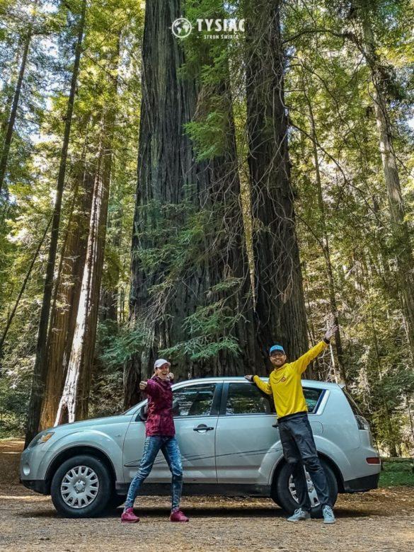 Avenue of the Giants - zwiedzanie Redwood
