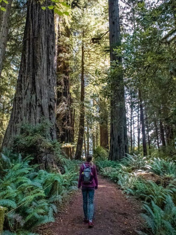 Redwood - zwiedzanie parku narodowego