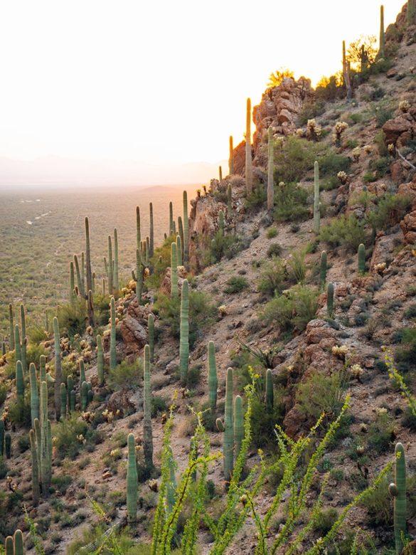 The Mimki - Park Narodowy Saguaro