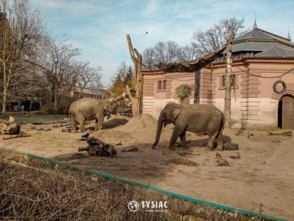 Wrocław - zwiedzanie - zoo