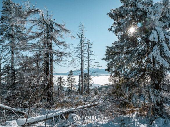 Turbacz zimą - widok ze szczytu