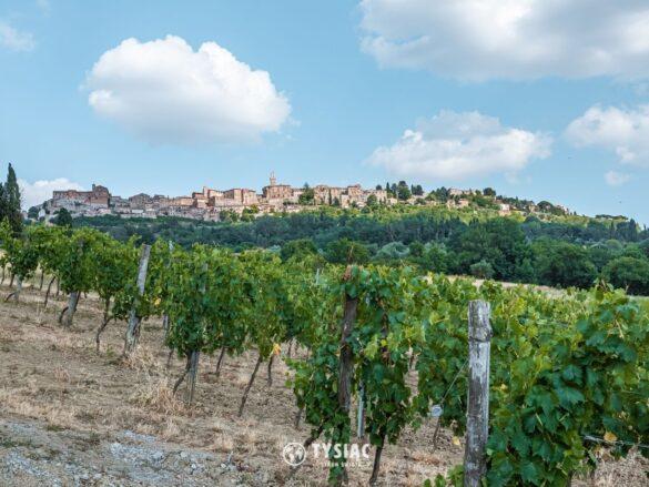 Montepulciano - winnica