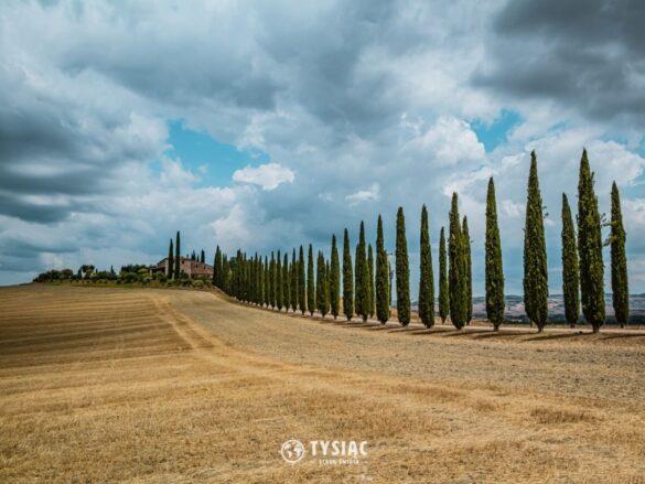 Droga z cyprysami - zwiedzanie Toskanii